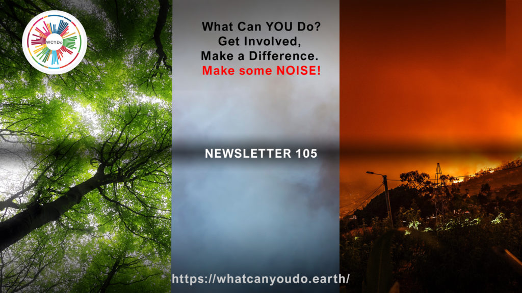 What Can You Do Newsletter 105